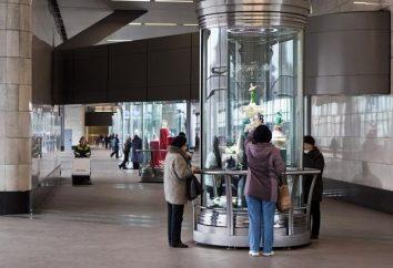 """Metro """"Colline dei passeri"""" – una pianta insolita nel sistema metropolitana di Mosca"""