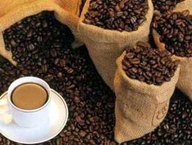 """Kawa """"Luwak"""" – najdroższe i kontrowersje w świecie kawy"""