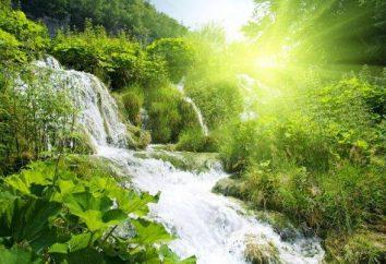 agricultura natural School – o futuro da Terra