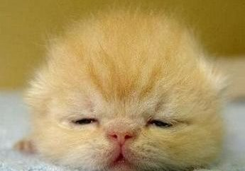 Jak wychowywać noworodka kotek: porady specjalistów