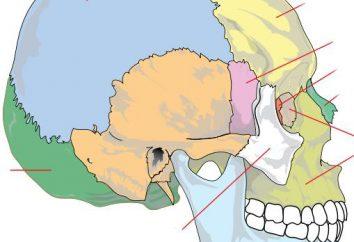 Latticed kości czaszki. Kojarzone i nieskrępowane kości czaszki