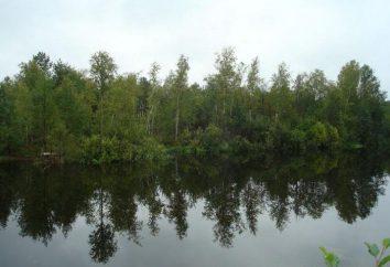 """plan de historia """"Vasyutkin lago."""" Las instrucciones para la supervivencia en el bosque"""