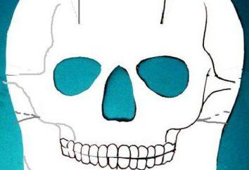 Jak sprawić, by czaszka papieru: sami mistrzowie