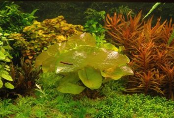 Ninfe: semina e cura in acquario