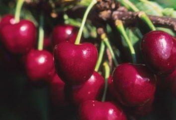Les meilleures variétés de cerises douces pour les jardiniers