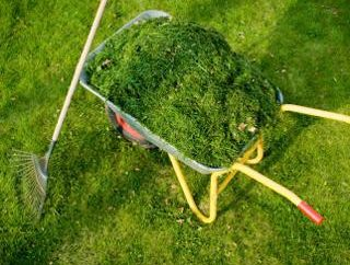 Ściółkowanie cięcia trawy – pomóc sobie i ogród łóżka
