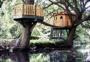 domy drzewa – jest oryginalna