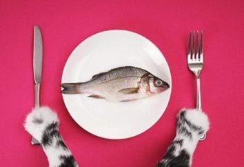 Prawidłowy wybór jedzenia dla kotów – klucz do zdrowia zwierząt