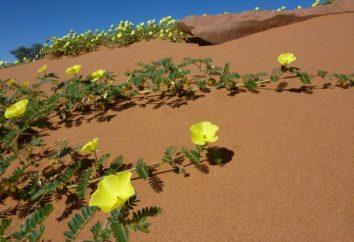 As mais belas flores do deserto