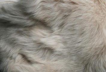 la moda de invierno: piel Toscana