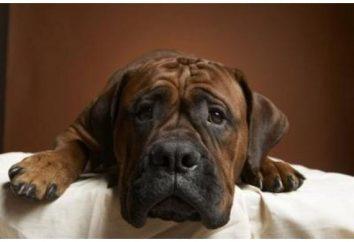 Jak wyciąć pazury psów? Przewodnik dla początkujących