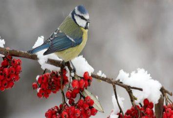 Que les oiseaux restent à l'hiver en Russie
