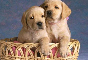 La pensión alimenticia cachorro – ¿qué es? El derecho a la pensión alimenticia del perrito