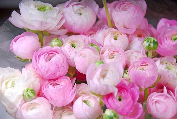 Fiori Simili Alle Rose Nome.Il Fiore Simile Ad Una Peonia Quali Sono I Nomi Di Fiori Come Le