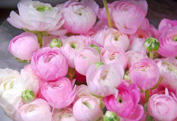 La fleur semblable à un pivoines. Quels sont les noms des fleurs, comme pivoines