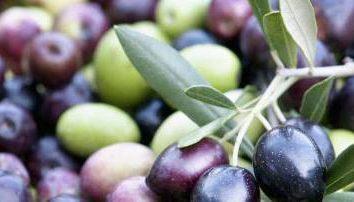 Aceitunas – una fruta o una baya? descripción