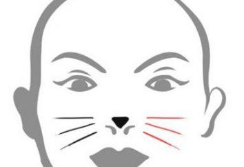Como desenhar um cara do gato. Instruções e recomendações