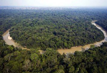 Les réserves mondiales de bois. principales ressources en bois du pays