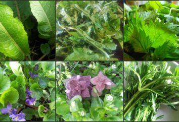 Los nombres de las hierbas. hierbas silvestres: nombre. Hierbas: nombre con fotos