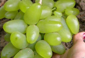 Bazhena – raisins aux qualités étonnantes
