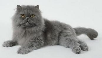 Los más bellos gatos – son tan difícil elegir