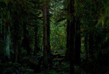 Co jest gęsty las?