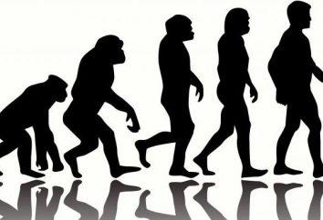 Ce qui est caractéristique de l'évolution humaine?