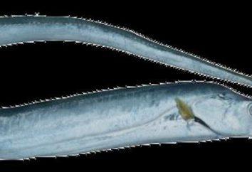 Fisch Schwert: Rezepte zu Hause