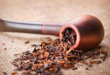 Lo pipas elegir? ¿Es posible cultivar tabaco para tuberías en la casa?