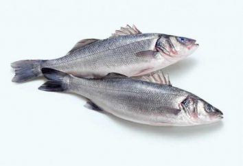 Seabass Fisch und wie die Vorbereitung