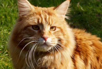 Badania dowiodły, że twój kot – rzeczywiście malutka lew
