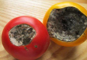 Comment faire face à cette maladie, comme la pourriture apicale des tomates