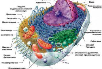 Cella: la potenza e struttura. Il valore delle celle di alimentazione. Esempi di celle di alimentazione