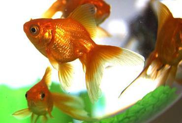 rêve aquarium signification