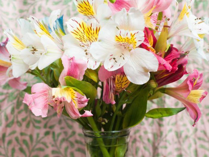 Traumdeutung: geben Blumen. Die Bedeutung und Deutung der Träume