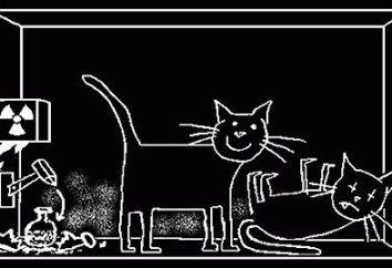 Kot Schrödingera – słynny eksperyment paradoksalne