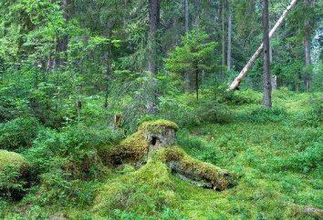 Wo ist die Zentral Forest Reserve? Zentral Forest State Biosphärenreservat: Beschreibung, Natur und interessante Fakten