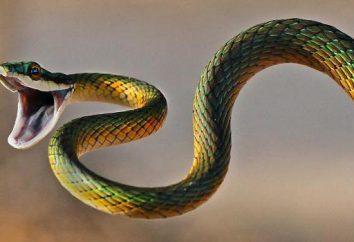 Serpenti: lo scheletro del rettile con didascalie e foto