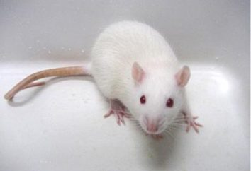 """La vivisección – ¿qué es esto? Significado de la palabra """"vivisección"""""""