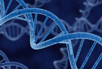 Gene, Genom, Chromosom: Definition, Struktur, Funktion
