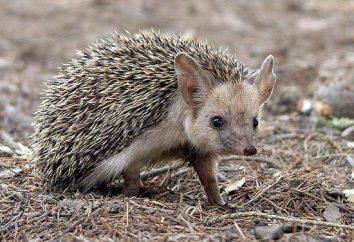 Zwierzęta Baszkirii, wymienione w Czerwonej Księdze: opis i ciekawostki