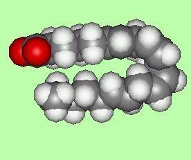l'acide arachidonique, l'avantage ou de mal au corps humain