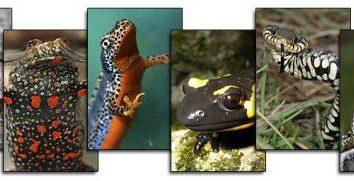 Herpetology – la scienza che studia rettili e anfibi