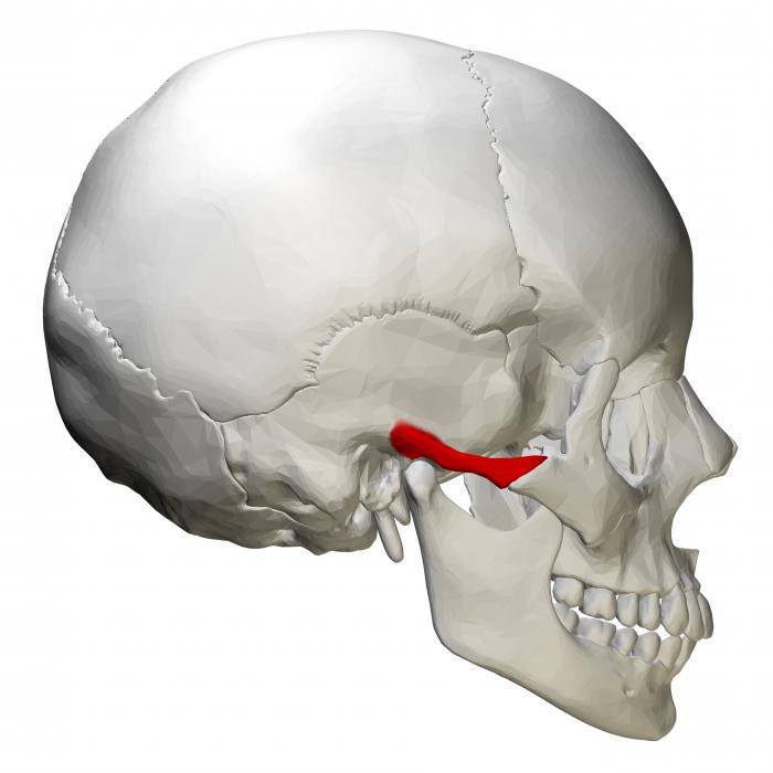 Pómulo. proceso temporal de hueso cigomático