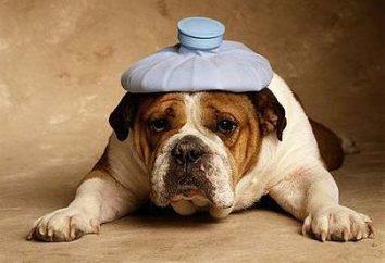 Intoxicação em cães: Sintomas e efeitos