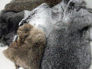 Manteau de lapin: critiques et soins
