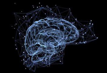 12 paia di nervi cranici: tavolo. nervi cranici: distribuzione e una breve descrizione
