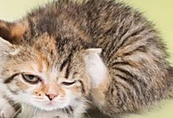Como la salida de las pulgas en gatos, que no es ni la mitad de un año?