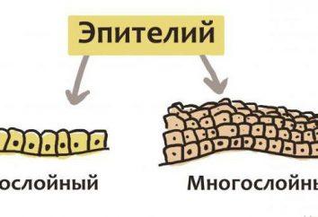 Características de la estructura del tejido epitelial. Caracterización de los tejidos epiteliales