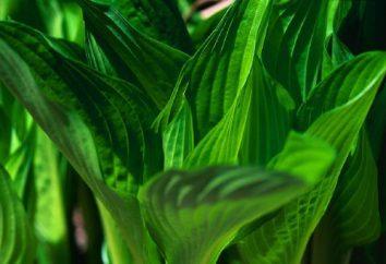 impianti luce che amano, un esempio di piante, le loro caratteristiche